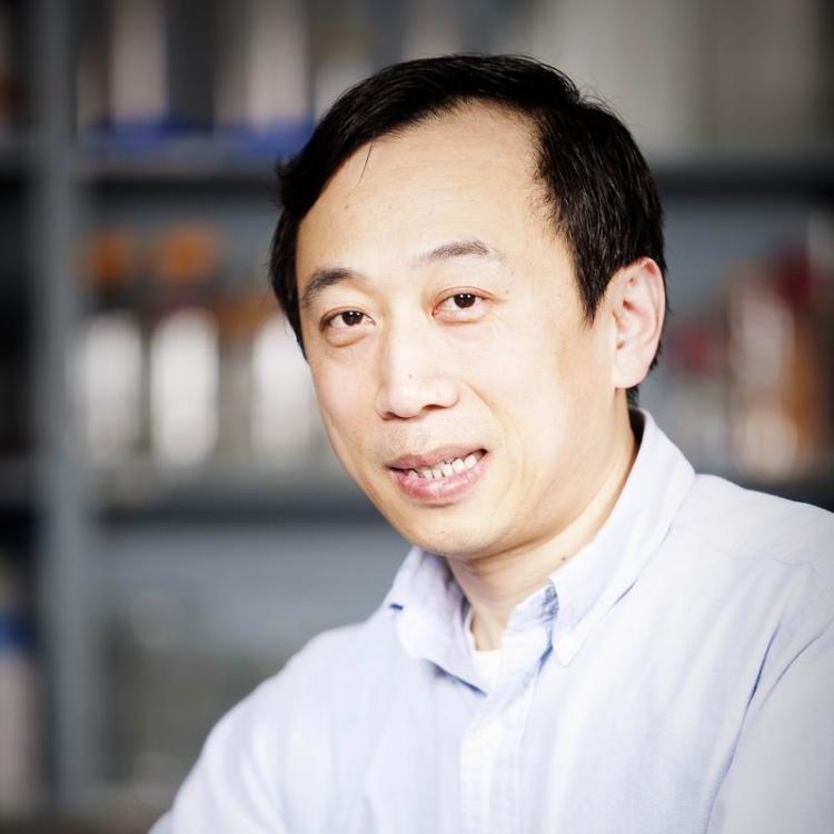 Xiaolang Yang